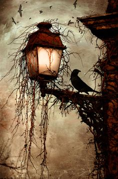"""The Raven - Edgar Allan Poe ~ Once upon a midnight dreary, while I pondered, weak and weary, Over many a quaint and curious volume of forgotten lore— While I nodded, nearly napping, suddenly there came a tapping, As of some one gently rapping, rapping at my chamber door. """"'Tis some visiter,"""" I muttered, """"tapping at my chamber door— Only this and nothing more."""""""