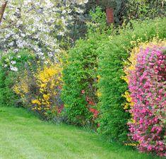 Voici les arbustes à planter pour avoir une haie des 4 saisons qui vous offrira fleurs, fruits et verdure tout au long de l'année. Verte et fleurie, voici nos conseils de plantation