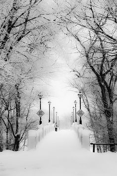 Assiniboine Park Bridge - Winnepeg, Canada in Winter