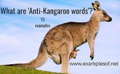 What are anti-kangaroo words? with 10 examples Interesting English words #english