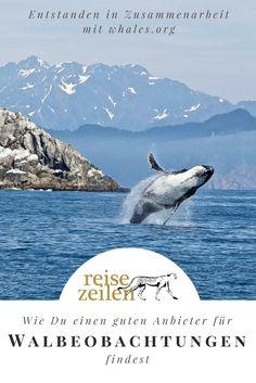Tipps und Wissenswertes zum Thema verantwortungsvolle Walbeobachtung