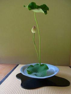Ikebana, need not many flowers to create a beautiful arrangement. Ikebana Arrangements, Ikebana Flower Arrangement, Floral Arrangements, Bonsai, Sogetsu Ikebana, Japanese Flowers, Interior Plants, Arte Floral, Green Flowers