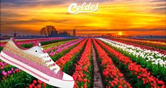 Casual high quality canvas shoes with famous destinations from around the world. Tulip Fields, Welcome Spring, March 1st, Tulips, Netherlands, Vineyard, Golf Courses, Finding Yourself, Around The Worlds