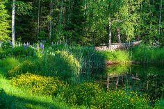 Evening light and shadows in the jungle. Finnish nature in June. (18th at 7 p.m.) #nikonphotography #greennature #finland #finnishnature #wilderness #june #midsummer #eveninglight #whitenights #tuusula #ourfinland #landscapephotography #lightandshadowphotography #järvenpää #naturephotography #kesäkuunillat #juhannusviikko #vihreys #kesäloma #countryside Green Nature, Nikon Photography, Light And Shadow, Finland, Vineyard, Outdoor, Instagram, Outdoors, Vineyard Vines