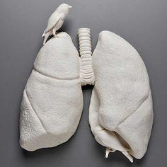 корица очищения кишечника
