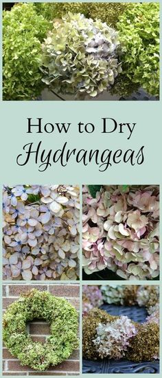 Drying hydrangeas is an easy technique to master, and a great way to preserve the beautiful blooms for use in your home decor. (Photo source not known) Hydrangea Not Blooming, Hydrangea Garden, Hydrangea Paniculata, Drying Hydrangeas, Jolie Photo, Lawn And Garden, Plant Care, Garden Projects, Garden Ideas