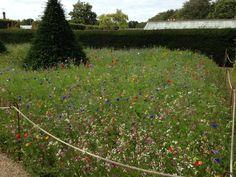 Random meadow style garden