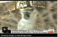 Animales del zoológico de Gaza, las otras víctimas del conflicto.     http://mexico.cnn.com/mundo/2014/08/19/animales-del-zoologico-de-gaza-las-otras-victimas-del-conflicto