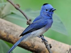 Rollapadu Wildlife Sanctuary - in Kurnool, Andhra Pradesh, India