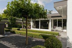Modern tuin in Brabants dorp bij villa met groenblijvende beplantingen.