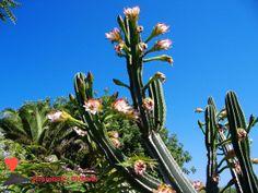 #Flowers #Of #Stromboli.