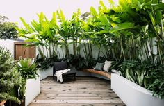 A small tropical garden with low-maintenance plants - - This award-winning design transforms a petite patch into an inviting, tropical-themed outdoor room. Small Tropical Gardens, Small Courtyard Gardens, Small Courtyards, Tropical Flowers, Small Gardens, Outdoor Gardens, Courtyard Ideas, Rooftop Gardens, Small Backyard Gardens