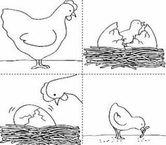 Life cycle of a hen sequencing cards. There are also lots of other great sequencing activities on this website. Sequencing Worksheets, Sequencing Cards, Story Sequencing, Worksheets For Kids, Kindergarten Worksheets, In Kindergarten, Speech Therapy Activities, Classroom Activities, Sequence Of Events Worksheets