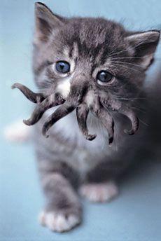Tentacle cat. Like a boss.