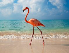 Google Image Result for http://onebigphoto.com/uploads/2012/06/elegance-of-flamingo-thumb.jpg