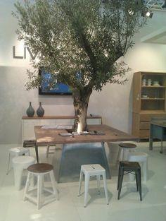 olijfboom met tafel