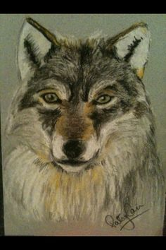 Pastel drawing wolf by Patsy Cain