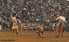 Latest from the National Western Stock Show & Rodeo in Denver