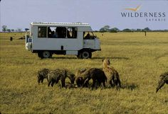 The Wilderness Way – a brief history Humble Beginnings, Conservation, Wilderness, Recreational Vehicles, Safari, Wildlife, Southern, Africa, The Incredibles