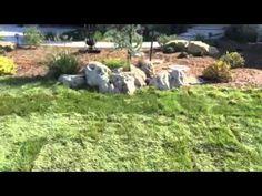Sod Services In Wichita Kansas Installation Animals For Kids Lawn