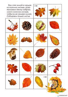 """Тематический комплект """"Осень"""" предназначен для детей от 1 года до 5 лет. В него входит больше 40 листов с заданиями. 2 игры """"Найди пару"""" -""""Грибы"""" и """"Осенние листья"""" Задания на счёт до 10 с природным материалом. Математические пазлы. Задания """"Что лишнее? и Почему?"""" Лист для разрезания,... Autumn Activities For Kids, Folder Games, File Folder, Educational Toys For Kids, Reggio Emilia, Forest Animals, Kids Education, Primary School, Baby Toys"""