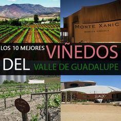 Visitar los viñedos de Valle de Guadalupe es sumergirse en el verdor de las vides, el colorido de los racimos de uvas, la majestuosidad de las barricas y el placer de las degustaciones. Te invitamos