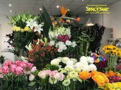 Aki a virágot szereti, rossz ember nem lehet! Plants, Plant, Planets