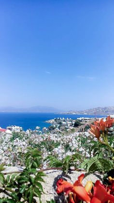 Ausblick auf Mykonos, Griechenland © Chistoph Bugram / Restplatzbörse Hotels, Partys, Dolores Park, Travel, Mykonos Greece, Travel Advice, Vacation, Viajes, Destinations