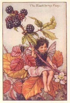 FLOWER FAIRIES: BLACKBERRY FAIRY. Vintage Print. c.1930