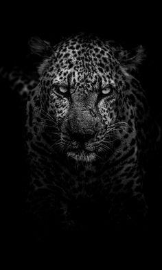 2160x3840 Wallpaper, Leopard Wallpaper, Hd Wallpaper Android, Animal Wallpaper, Computer Wallpaper, Leopard Tapete, Nature Architecture, Black Tigers, Art Graphique