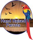 About us – Hand Raised Parrots for Sale