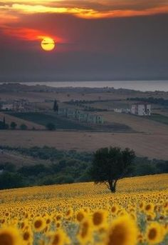 Sunset in Tuscany, Italy