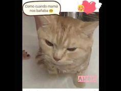 Gatito tomando un baño - YouTube