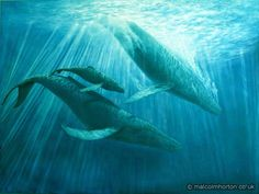Whale Song Poster::Nature::Malcolm Horton Portfolio & Poster Print Store