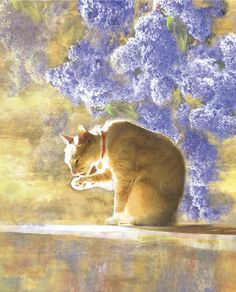 Bathing Tabby Cat - by Dianne Woods, Floral, Art,