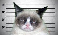 Grumpy Cat mugshot