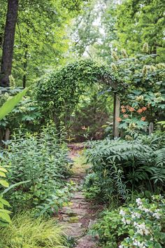Robyn Griffith Brown Tennessee Garden_Consider These Picks for Dry Shade Hydrangea Shade, Smooth Hydrangea, Hydrangea Garden, Amazing Gardens, Beautiful Gardens, Shade Plants Container, Shade Shrubs, Plants Under Trees, Front Yard Plants