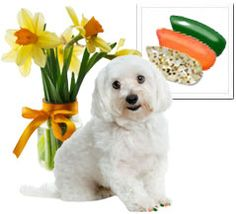 Daffodil Combo (gold glitter/orange/green) Define your dogs' Spring fashion by decking them out in our unique collection of spring daffodil florals.