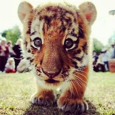 freaking adorable