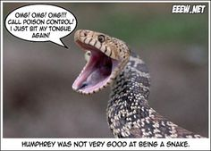 I just bit my tongue again. Humphrey was not very good at being a snake. Funny Animal Pictures, Cute Funny Animals, Animal Pics, Humorous Animals, Hilarious Pictures, Animal Quotes, Animal Memes, Animal Humor, You Funny