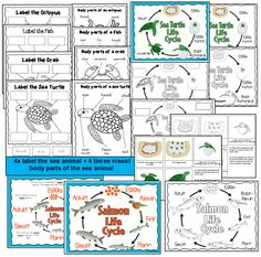 Under the sea- Sea Life theme pack- Life cycles, labeling sea life- part of a large kindergarten theme pack
