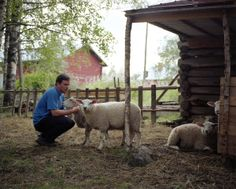 Finnish designer, Harri Koshinen with lambs