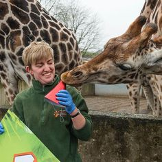 Happy 1st Birthday Fennessy!  Keepers presented our one-year-old with a gigantic birthday card & fed him is favourite treat of chopped bananas & apples!      #wmsp #giraffe #birthday #animals #nature #safari #westmidsafari #conservation #1stbirthday #wildlife #birthdayboy