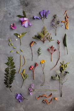 Beautiful display by artist Geninne Zlatkis