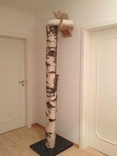 Das Wandbett nature ist wieder zu haben! - Seite 24 - Katzen Forum