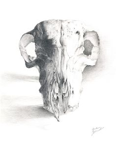 """Skull"" Drawing by Greta Schimmel posters, art prints, canvas prints, greeting cards or gallery prints. Find more Drawing art prints and posters in the ARTFLAKES shop. Pencil Drawings, Art Drawings, Sheep Skull, Medical Illustration, Canvas Prints, Art Prints, Prismacolor, Still Life, Skulls"