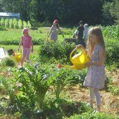 Lasten ja nuorten puutarhayhdistys ry: a common garden for children and youth in Kumpula