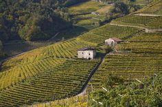 I love the landscape in Trentino-Alto Adige!