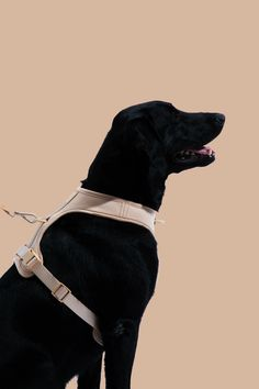 Dog Harness - Free Expert Advice On The Subject Of Dogs Dog Care Tips, Pet Life, Service Dogs, Dog Harness, Dog Accessories, Dog Supplies, Large Dogs, Dog Owners, Poodle