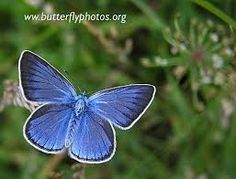 pictures of butterflies - Google Search